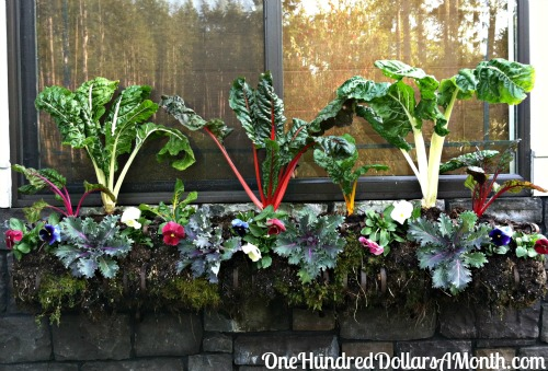 Garden Planter Boxes Ideas