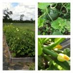 gardeing in texas raised garden beds