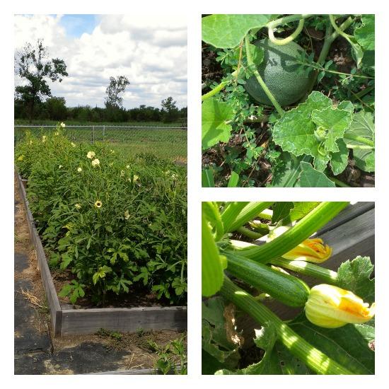 Mavis Garden Blog – Pictures Sent in From Readers