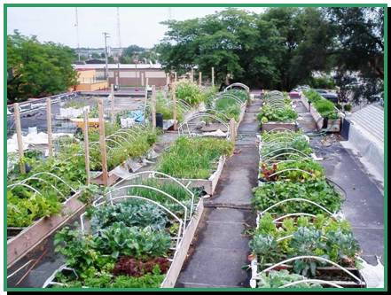 Green Gardens – Rooftop Gardens in the City