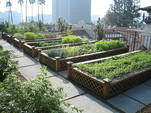 Green Gardens   Rooftop Gardens In The City   One Hundred Dollars A Month