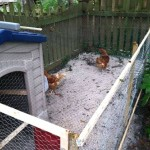 clever chicken coop ideas playhouse