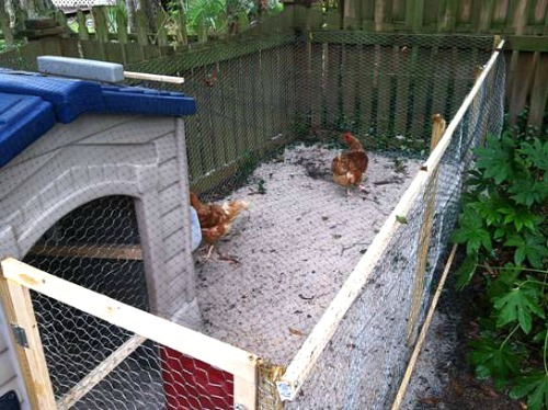 Chicken Coop Run Cost ~ learn important german phrases