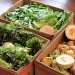 free produce mavis