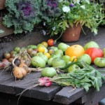 garden bench vegetables