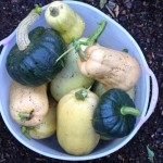 heirloom winter squash picture