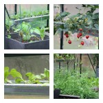 how to grow food in a magnum greenhouse