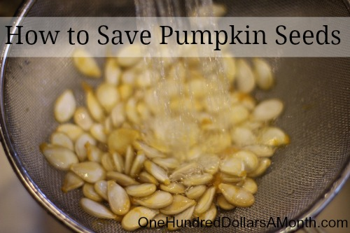 How to Save Pumpkin Seeds