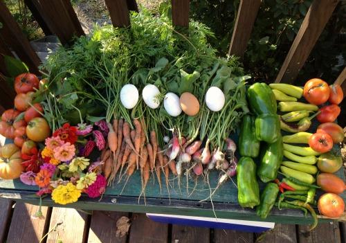 Reader Megan Sends in Her Garden and Chicken Photos