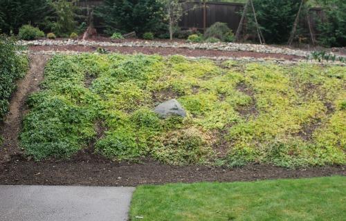 Mavis Garden Blog Planting Vinca Minor A Hillside One