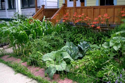 Kids Vegetable Garden Ideas Raised Beds