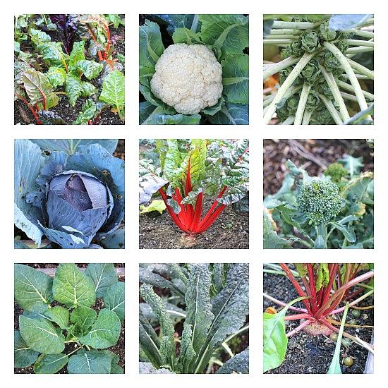 Grow Your Own Food – Mavis' November Garden Tour