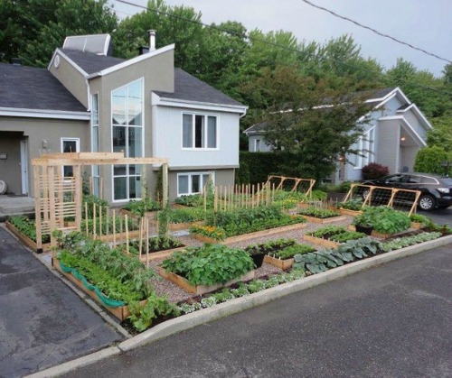 Pictures Of Front Yard Vegetable Gardens