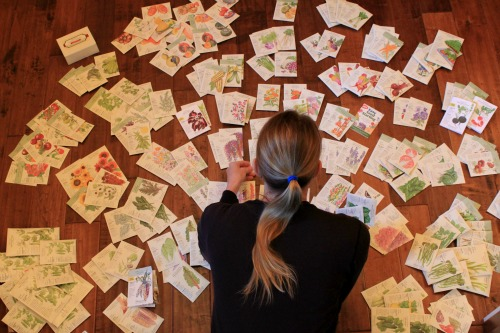 botanical interests seeds seed packets