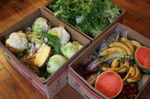 How to Get Free Food Week # 32 – Reclaimed Food Show and Tell