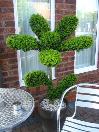 cool topiary designs flower