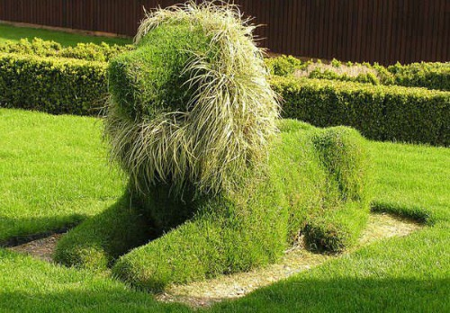 cool topiary designs lion