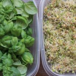 fresh basil and sprouts