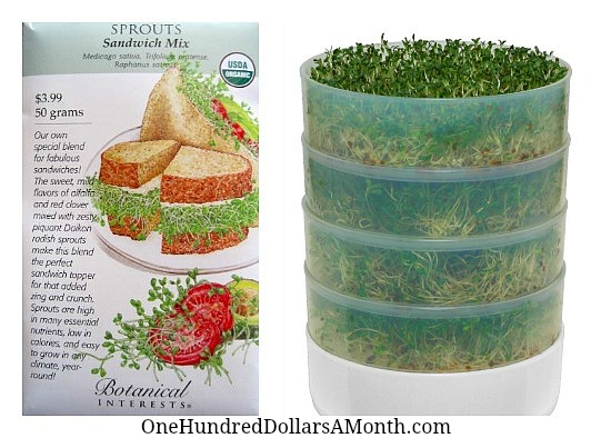 how to grow your own sandwich sprouts