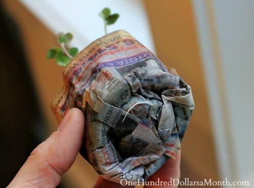 DIY-paper-pot-seedlings