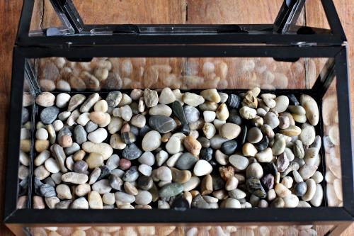 Terrarium rocks