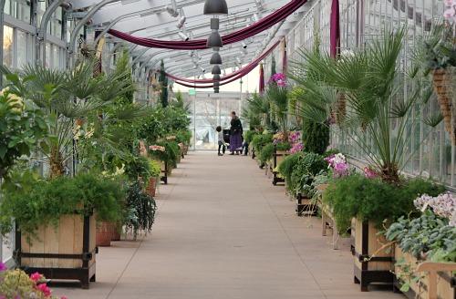 denver botanic garden orchid