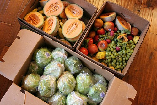 Reclaimed Food Show and Tell