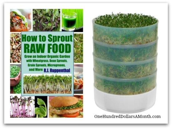 how to sprout raw food