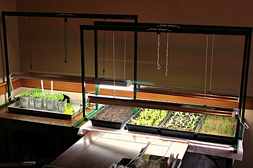 Mavis Garden Blog Grow Light Set Up and Pictures of Seedlings