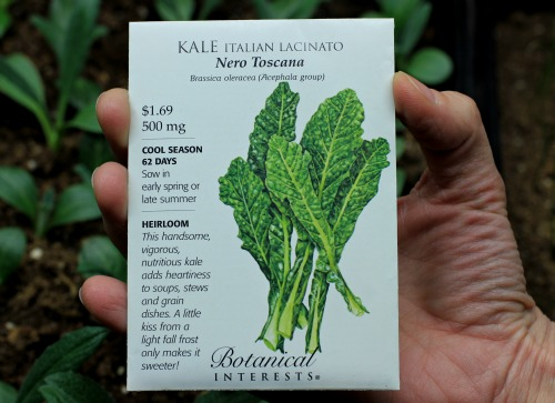 how to grow kale  start to finish