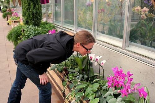 Denver Botanic Museum Orchid Showcase