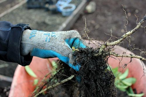 Mavis Garden Blog – Moving Raised Garden Beds