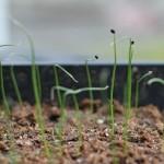 Mavis Garden Blog – Seedlings Update