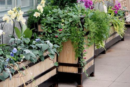 overflowing planter box
