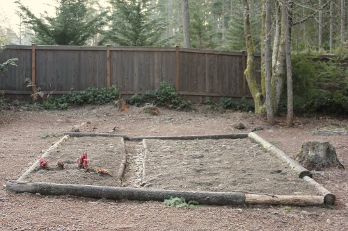 Mavis Butterfield | Backyard Garden Plot Pictures – Week 3 of 52