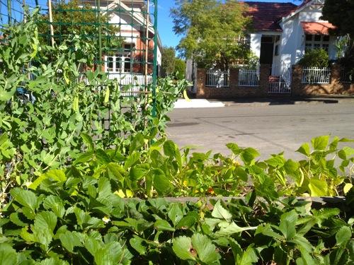 street garden in sydney australia