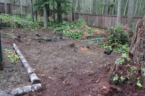 wooded garden setting pictures