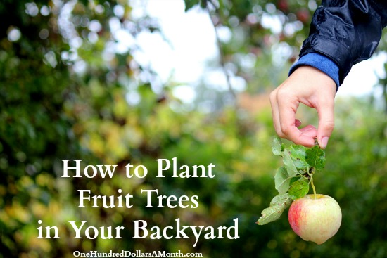 How to Plant Fruit Trees in Your Backyard