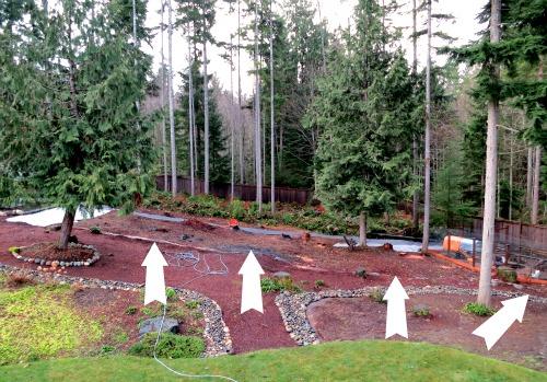 backyard garden wooded lot