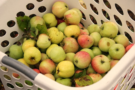 basket of apples