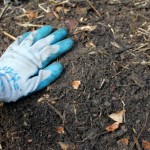 garden glove dirt
