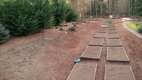 Mavis Butterfield   Backyard Garden Plot Pictures – Week 8 of 52