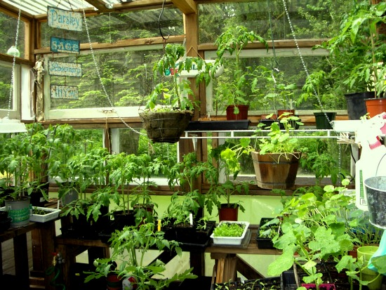 Mavis Mail – Charla From Bellingham, Washington Sends in Her Garden Photos
