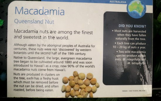 how to macadamia nuts grow