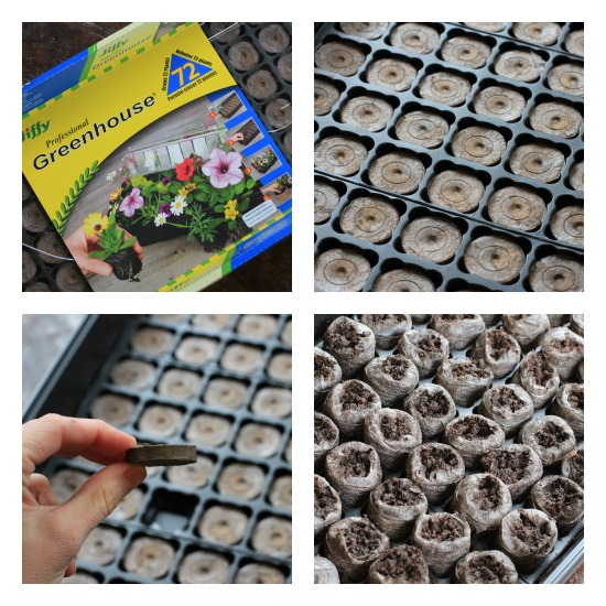 How to Grow Tomatoes {Start to Finish}