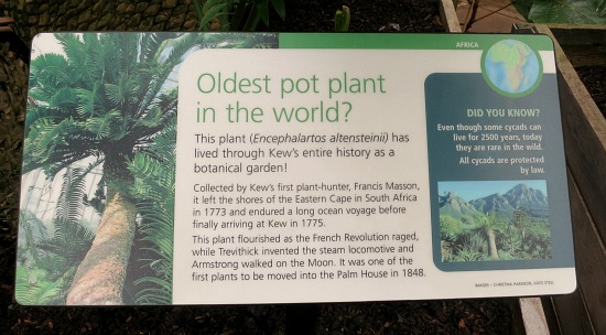 kew gardens oldest pot plant
