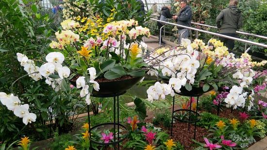 orchid floral arrangements