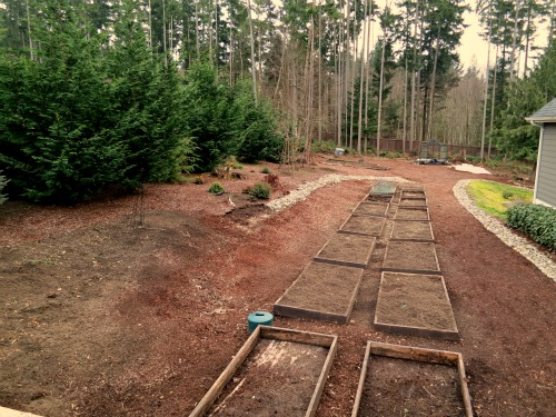 Mavis Butterfield   Backyard Garden Plot Pictures – Week 6 of 52