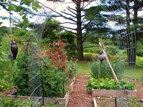 raised garden beds bean trellis