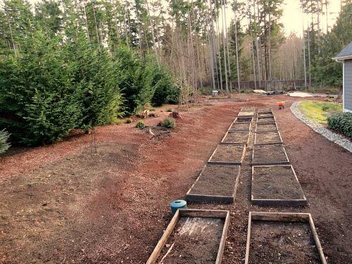Mavis Butterfield | Backyard Garden Plot Pictures – Week 7 of 52